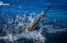 Fishtales – Bonaire Big Game Fishing