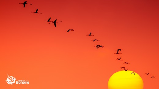 Flamingoes and the setting sun